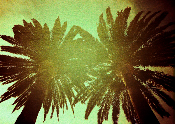 palm tree, long beach, lomo lc-a, film, juuuuicy, cross process