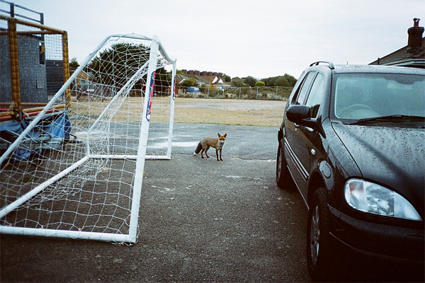 fox, england, lot, yashica t, porta 400vc, juuuuicy