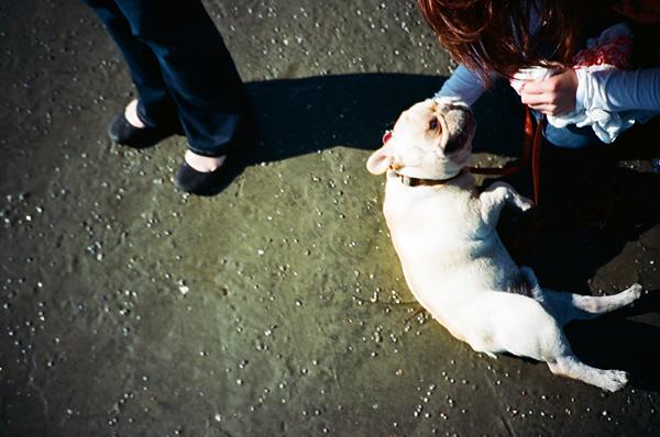 dog, beach, sand